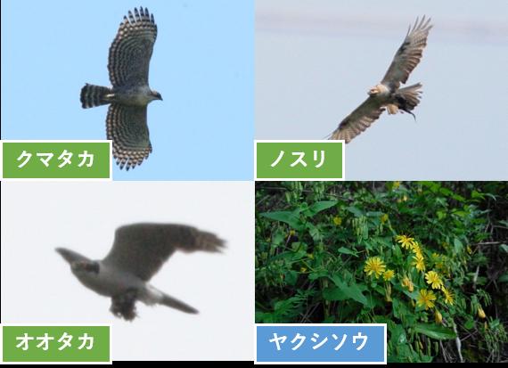 上松南木曽線 猛禽類調査